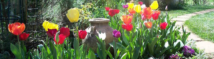 Tulip time in Bowral is the best for a weekend getaway